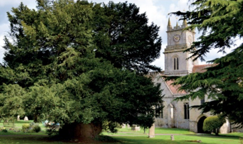 A Yew Tree in a churchyard