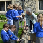 14  |  Poppy planting with St Peter's Methodist School